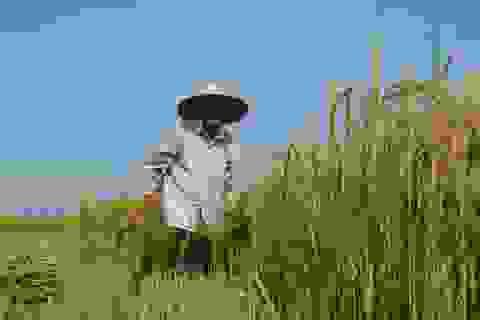 Cha ơi, quê mình gió Lào đã thổi chưa?