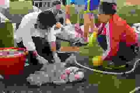 Niêm phong 3 con lợn đã mổ dương tính với chất tạo nạc