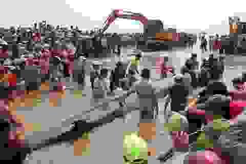 Hàng nghìn người xem giải cứu cá voi hơn 10 tấn mắc kẹt