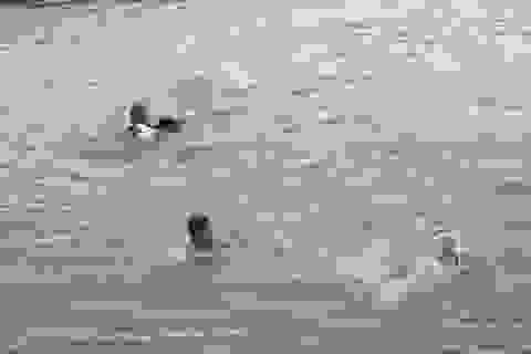 Học sinh lớp 4 tử nạn khi dùng chậu làm phao bơi