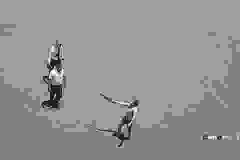 Nhóm nam nữ mang kiếm, tuýp sắt truy đuổi nhân viên bến xe Vinh
