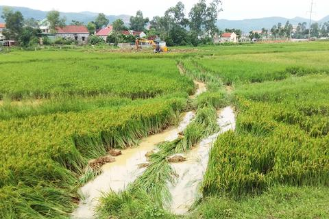 Dân chưa nhận tiền đền bù, đơn vị thi công đã đào ruộng phá lúa?