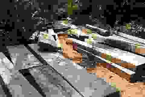 Thuê người khai thác gỗ trái phép với giá 200 nghìn đồng/ngày