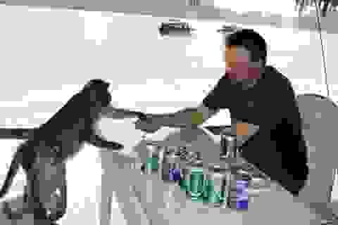 Háo hức ra đảo nhậu cùng... đàn khỉ