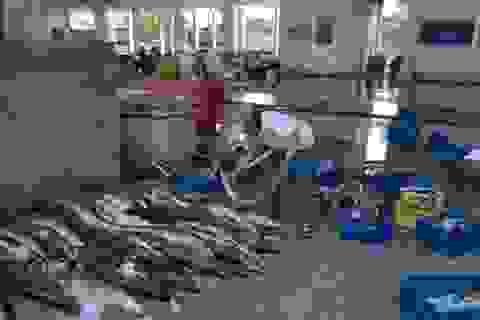 Ngư dân được mùa, giá hải sản giảm mạnh