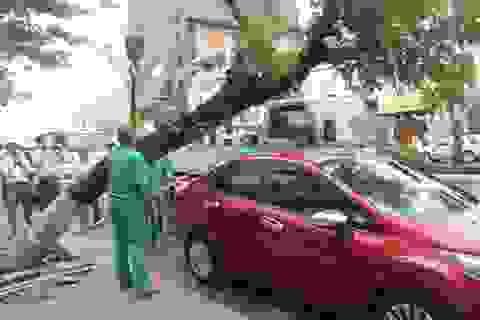 Đà Nẵng: Cây xanh bỗng dưng bật gốc đè lên xế hộp