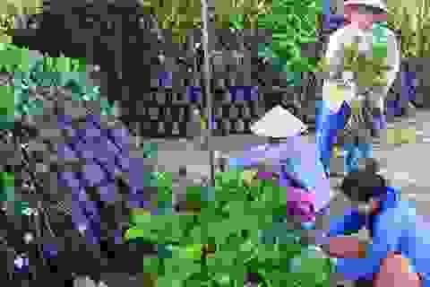 Sau hạn mặn, cây giống tăng giá gấp 2-3 lần