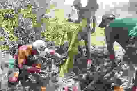 Bến Tre: Thu tiền triệu nhờ nghề…bứng gốc cây