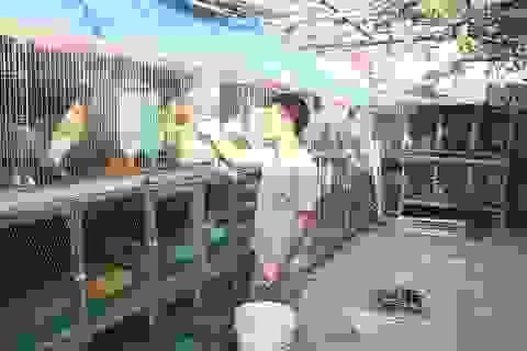 8X bỏ lương nghìn đô về quê nuôi giống gà cảnh trăm triệu đồng/con