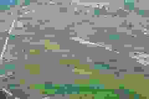 Cánh đồng lúa Bắc Sơn đẹp lộng lẫy nhìn từ trên cao