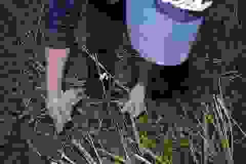 Một buổi đi săn chuột đồng...