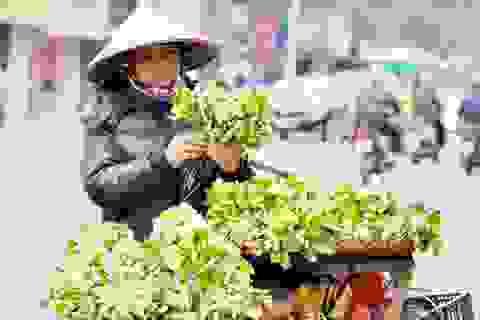 Hà Nội: Đẹp nao lòng với mùa hoa bưởi tháng 3
