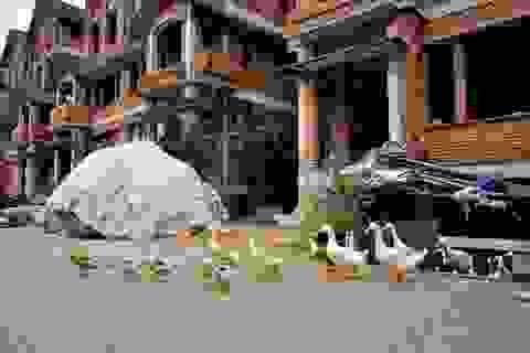 Hà Nội: Biệt thự triệu đô thành nơi trồng rau, nuôi vịt