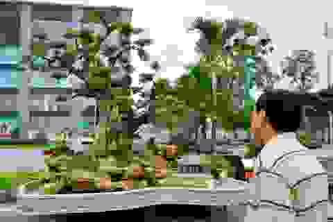 """Ngắm dàn """"siêu cây"""" tiền tỷ đang tụ hội ở Hà Nội"""