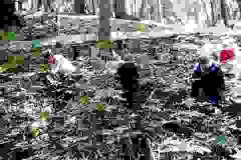 Chính phủ phê duyệt đề án trồng sâm Ngọc Linh