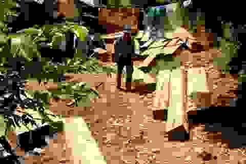 Đình chỉ công tác 3 cán bộ kiểm lâm vụ phá rừng Sông Tranh