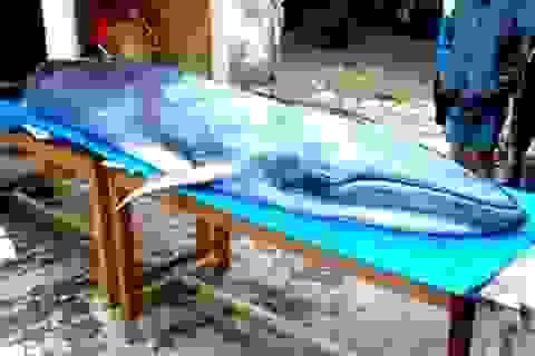 """Cá voi nặng hơn 2 tạ """"lụy"""" bờ"""