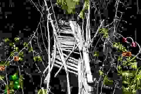 """Những cây cầu treo nhìn đã """"rụng tim"""" ở miền núi Quảng Nam"""