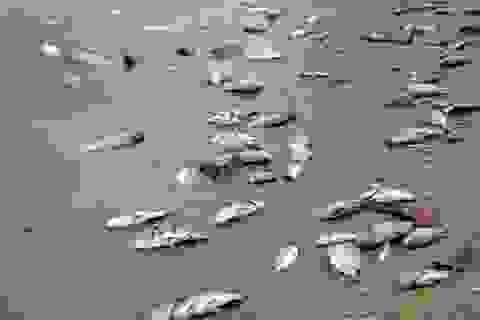 Cá chết phơi trắng bụng ở hồ thủy lợi