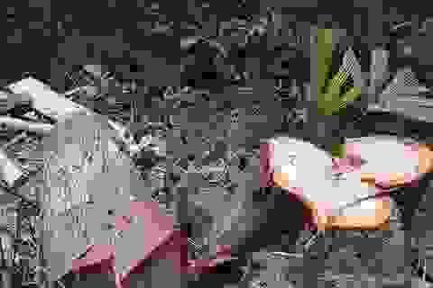 Vụ phá rừng pơmu: Bộ đội Biên phòng tỉnh nhận trách nhiệm