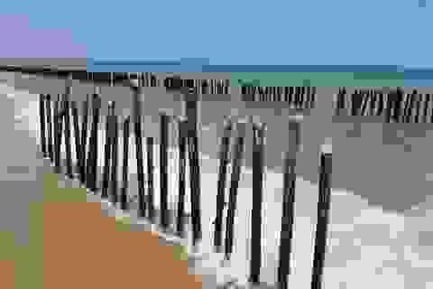 Dựng rào tre ngoài bờ biển ngăn sạt lở