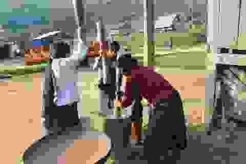 Quảng Trị: Độc đáo Tết mừng lúa mới của đồng bào Pa Kô, Vân Kiều