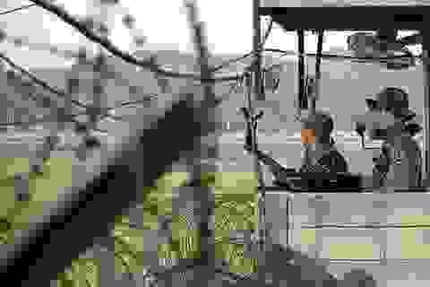 Hàn-Triều đấu súng trong vùng phi quân sự