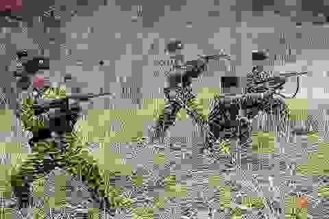 """""""Triều Tiên từng đưa 5 đội biệt kích tới Mỹ"""""""