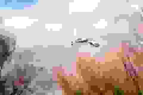 Quay được cảnh 2 trực thăng đâm nhau trên bầu trời Argentina