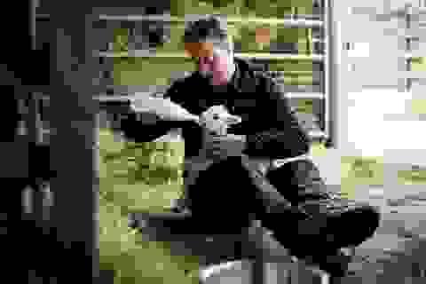 Thủ tướng Anh cho cừu uống sữa