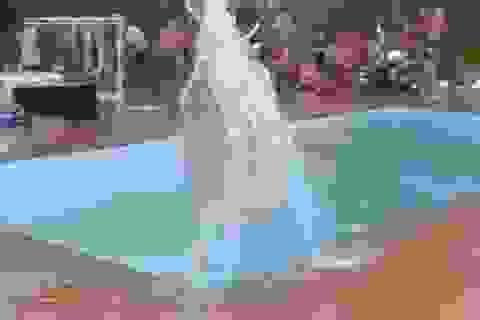"""Hãi hùng cảnh động đất gây """"sóng thần"""" trong bể bơi"""