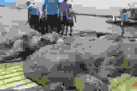 Philippines thả 9 ngư dân Trung Quốc bị phạt tù vì đánh bắt trái phép