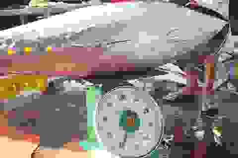 Ngư dân lao đao vì mất mùa cá ngừ đại dương Trường Sa
