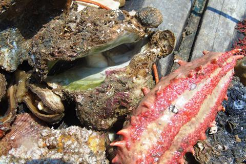 """Vụ cá biển chết ở miền Trung: """"Mất 60-70 năm chưa chắc đã phục hồi"""""""