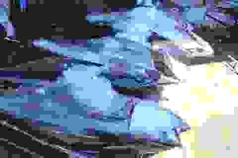 """Loay hoay """"nâng tầm"""" cho cá ngừ đại dương"""