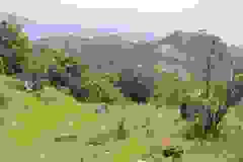 """Vụ 100 ha rừng có nguy cơ bị """"xẻ thịt"""": Tỉnh yêu cầu báo cáo"""