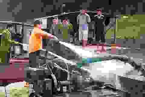 Thanh Hóa: Xử phạt 114 triệu đồng 9 thuyền khai thác cát trái phép