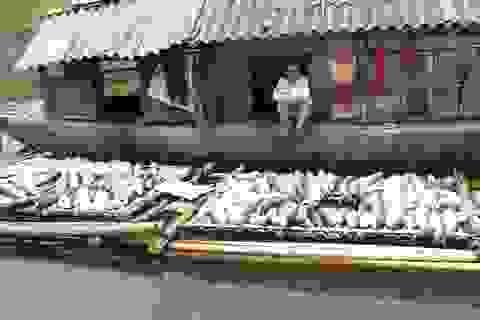 Vụ nước sông đổi màu, cá chết: Nguy cơ phá sản, trắng tay!