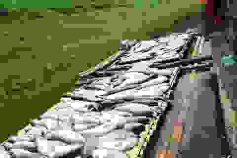 """Vụ nước sông đổi màu, cá chết: Thanh Hóa """"cầu cứu"""" Thủ tướng"""