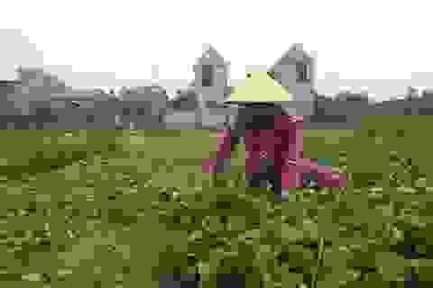 Tiếp tục xảy ra động đất tại A Lưới, tỉnh Thừa Thiên - Huế