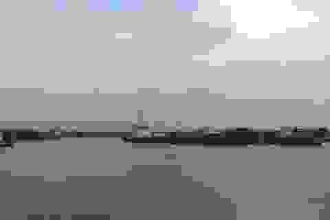 Cá chết tại biển Thanh Hóa: Giám sát môi trường Khu kinh tế Nghi Sơn