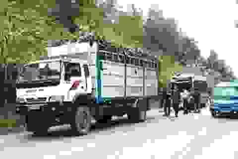 """Xe khách """"cắn"""" đuôi xe tải, 11 người bị thương"""