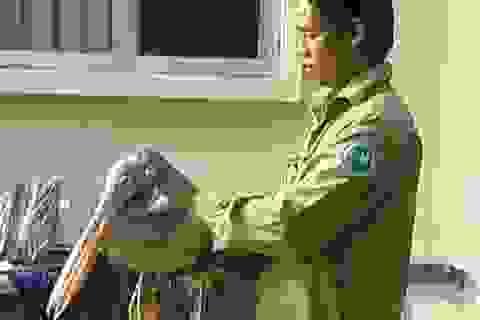 Người dân bắt được chim lạ nặng hơn 3kg, cao gần 1m