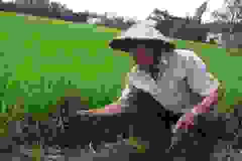 """Lão nông ủng hộ 1.000 giạ lúa, cán bộ """"run tay"""" khi nhận"""