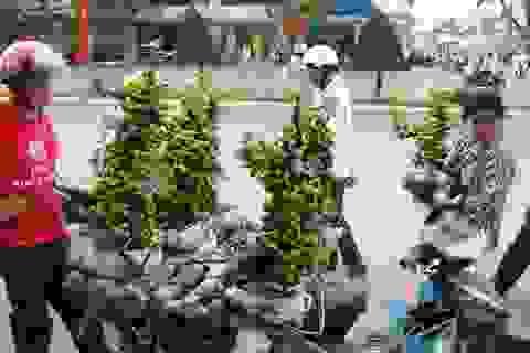 Chưa Tết đã xuất hiện nạn bán hoa kiểng giả