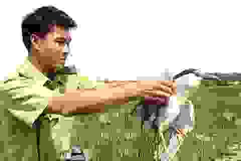 Thả nhiều loài chim quý hiếm vào Vườn Quốc gia Tràm Chim
