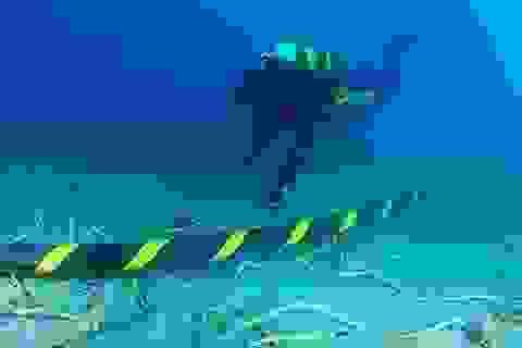 Cáp quang biển AAG sắp bảo trì vào ngày 22/6