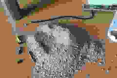 """""""Choáng"""" với pin sạc dự phòng chứa toàn cát"""