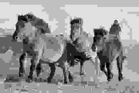 Hình ảnh về đất nước của những con người được sinh ra trên lưng ngựa