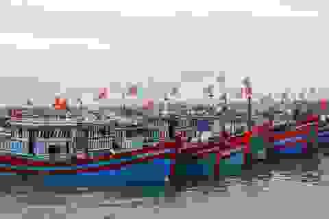 Điều tra tình trạng trục lợi chính sách hỗ trợ khai thác thủy sản